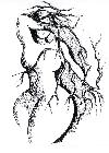 crochiu - Ilustraţie la Marcel Moreau Celebrarea femeii _ http://laurapoanta.ro/Poze/carti/crochiu_-_fata_din_vis.jpg
